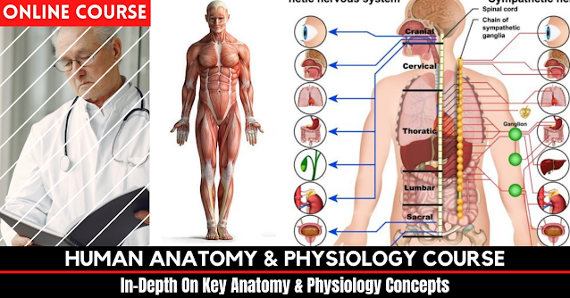 Human Anatomy & Physiology Course Review – Honest Opinion