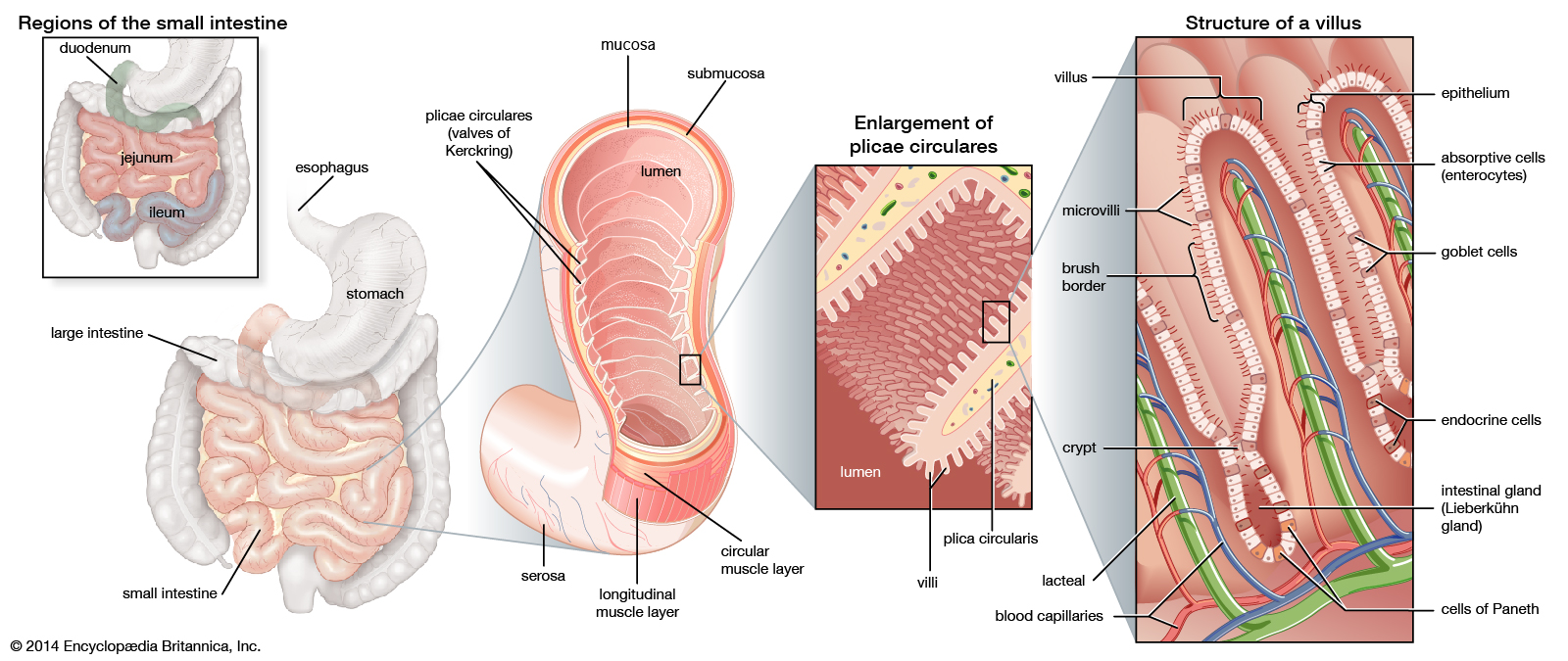 About Anatomy and Physiology Online Course – Full Guide